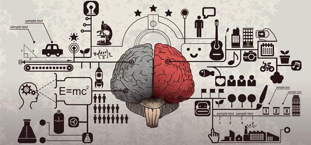 infográfico de cérebro humano e diferentes habilidades